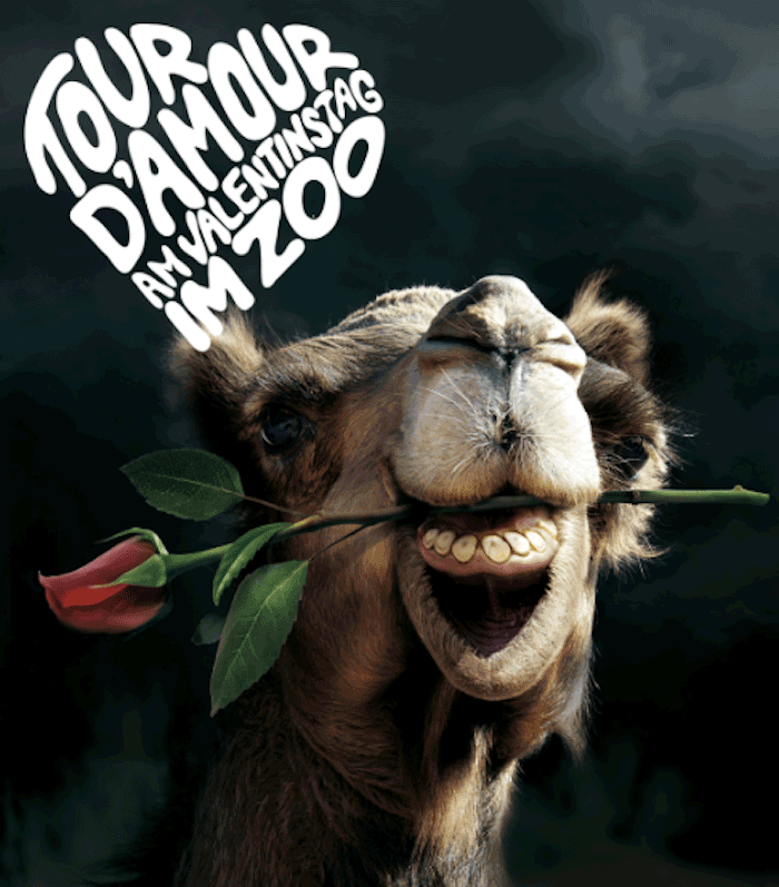 Campaña de publicidad zoo Día de San Valentín
